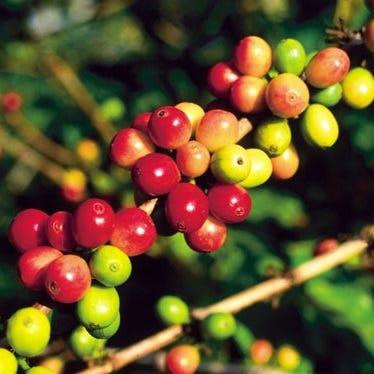 Custom Coffee Labels https://mcprod.labelvalue.com/media/images/content/hawaiian-coffee_100x100.jpg